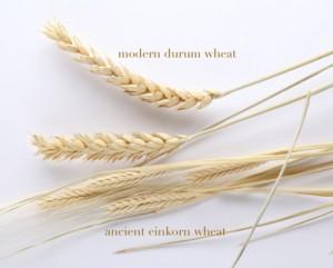 einkornwheatShow diff