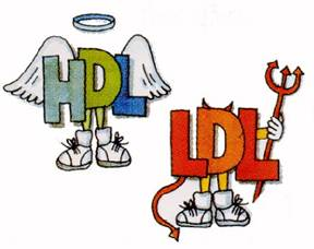 hdl-and-ldl-cholesterol