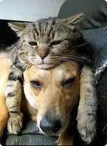 dogcatfriends