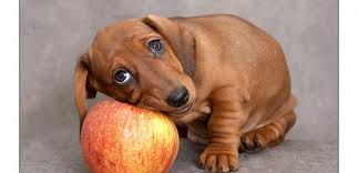 dogwithapple