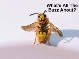 Bee-Buzz-fun-joke-niacin