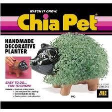 chia-pet-2-pig