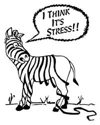 stressed-out-zebra-cartoon