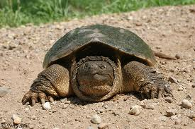 turtle-slower-you-go-faster-I-look