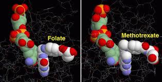 folate-B9-vs-metotrexate