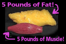 muscle-versus-fat-five-lbs
