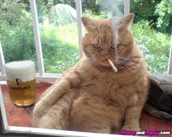 cat-taking-break-with-smoke-and-some whiskey
