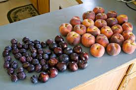 plums-and-peaches-many-displayed