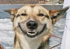 smiling-dog-face