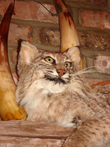 feline-found-that-catnip-works-a-lot-better than-aspirin-for-pain