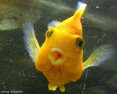 weird-fish-kissing-nice-lips