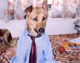 job-interview-goes-to-the-dog