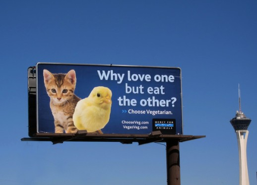 why-love-one-but-eat-the-other-vegetarian-billboard-kitten-vesus-chick