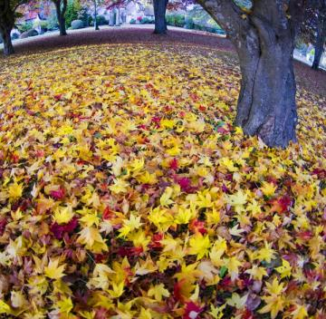autumn-brings-lots-of-leaves-to-rake-and-sneeze-from fungus-allergens
