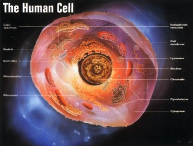 picture-human-cell-color-57-trillion-make-human-body