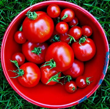 tomato-in-bowl-red