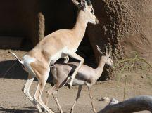 two-deer-burning-off-calories-pose