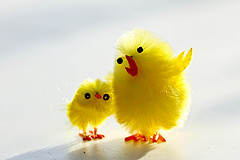 two-chicks-making-small-talk
