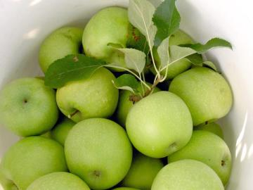 just-picked-off-the-farm-apples-green-rome-delicious