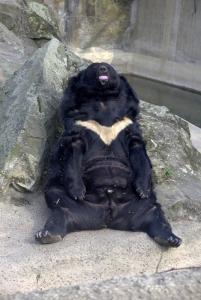 fda-as-lazy-bear